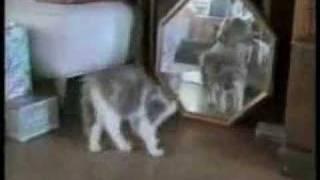 動物おもしろムービー*ネコハプニング集