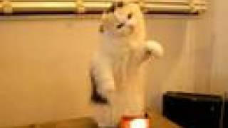 テルミンを演奏するネコ cat plays with a teremin
