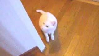 階段がのぼれない猫