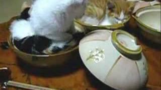 ねこ鍋の作り方