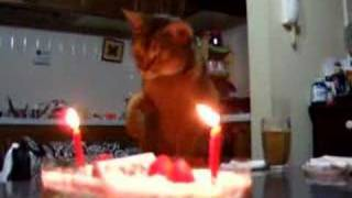 必殺!炎を消す猫 Cat Puts Out Fire