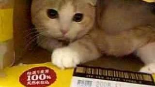ビール箱猫