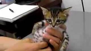 赤ちゃん猫★病院にて絶叫中