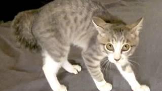 ナナメんなるネコ - Sliding Cat -