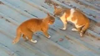 【流血戦】壮絶な猫のケンカ