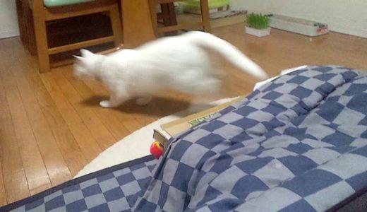 Funny Animal Videos! ドッキリ おもしろねこ動画 いたずら好きな白猫ミサイル発射 Funny missile cat