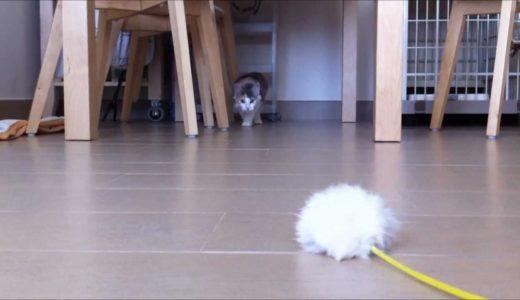 ゆっくり近づく猫 -Seeking Cat-