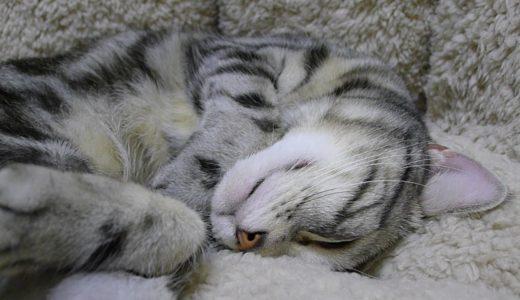 もふもふソファと猫