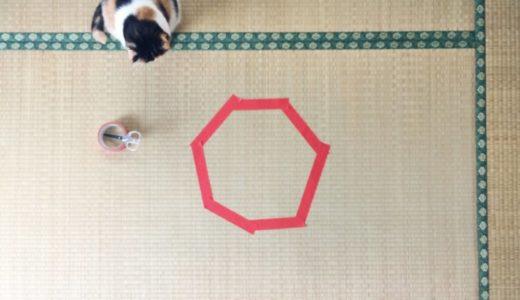 CAT IN CIRCLE | 猫転送装置 | 猫ホイホイ - guremike