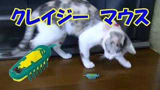 猫おもちゃ「クレイジーマウス」を見守るネコ吉♪ Neko-Cat watching a cat toy [Crazy Mouse]