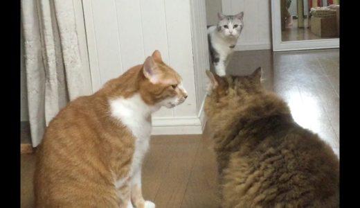 とばっちり・猫