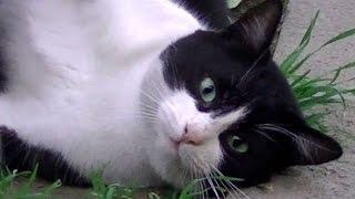 名前を呼べば来る猫!ストーカー猫の可愛さと災難 振り返れば奴がいる!