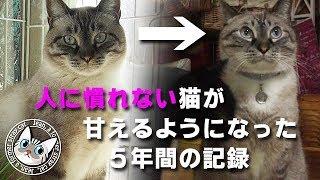 【 jean & pont 284】 凶暴な保護猫から5年で甘えん坊へゆっくり変化します #元野良猫 #保護猫
