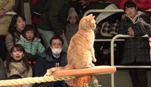 なかなか見れない猫によるショー ザ・キャッツ 那須どうぶつ王国へ行って来ました! 2017年2月4日