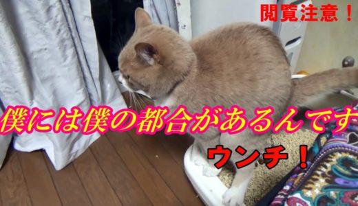 猫が急にトイレ外でウンチを粗相し始めるには理由がある! 注:ウンチ場面あり