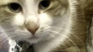 今度は何かの声が映像に!その時、猫はその声にお返事した♥♥猫との会話を楽しむ動画 Conversation with a cat
