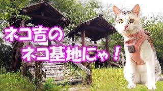 お散歩猫ネコ吉の秘密基地!?何度下ろされてもまた戻る! Walking cat Neko-kichi's secret base!?  She won't go down!