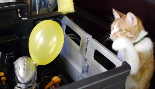 猫と風船 Cats and balloons