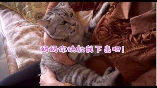 养猫前和养猫后,妈妈的态度反差,告诉你什么叫真正的隔代亲!