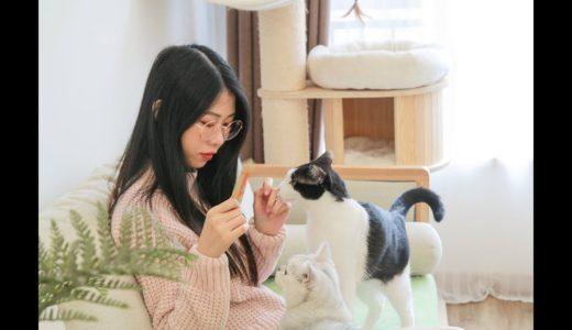 【花花与三猫】记录我家真实的一天,和四只猫羞羞的日常!vlog!