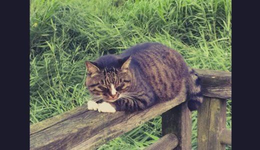引地川親水公園のネコ