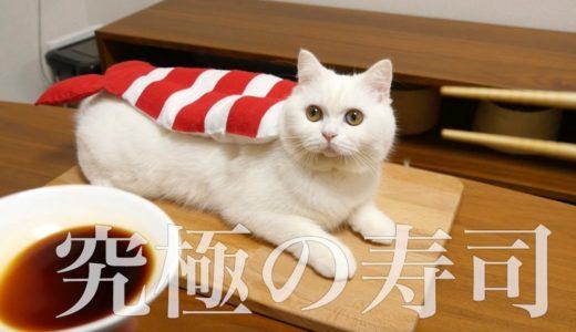 【飯テロ】究極のねこ寿司を本気で作ってみた!