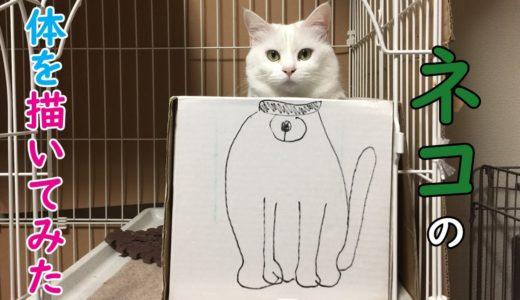 ネコの体を描いてみた
