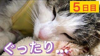 ♯70【避妊手術】野良猫(モモ&ねこた)を保護して5日目。急激な環境変化に体調が‥。【我が家編】