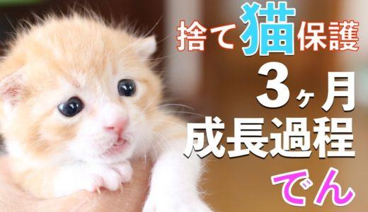 捨て猫でんの成長記録:捨て猫をゴミ袋から保護してからの3ヶ月の成長過程まとめ