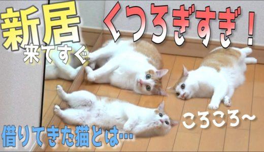 【嘘やん】新居に猫を放ったら秒でくつろぎ始めました…www