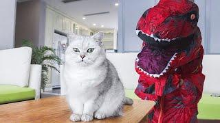 【花花与三猫】女主人扮恐龙把猫吓的到处飞,直接六亲不认,一脱衣服,猫:妈?