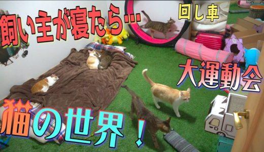 人間が寝た後の猫たちを隠し撮りしたら猫の世界が広がっていた…!【運動会】