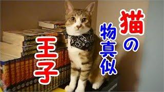 噛み付き猫から物真似王子になった猫!?