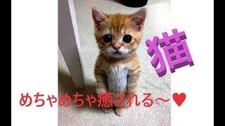 【癒し】最高に癒される猫, ネコ・癒し動画集・かわいい , Very cute Cat・Healing