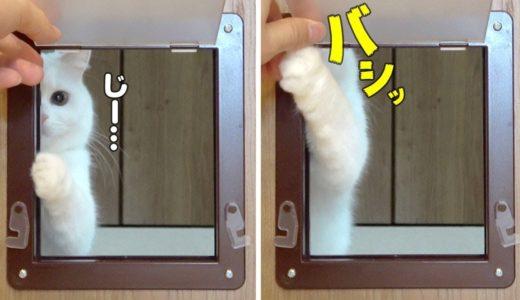 ペットドアをつけた時のうちの猫の反応が可愛すぎた…!