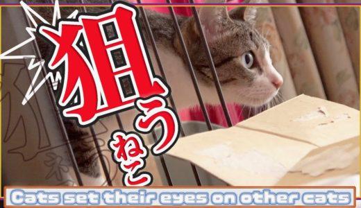 狙う猫を狙うネコ