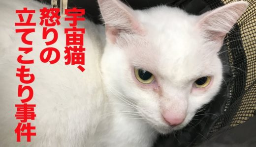 腎不全の宇宙猫、検診と思いきやフェイントを食らう(18年10月) Medical examination for my cat's kidney failure(October, 2016)