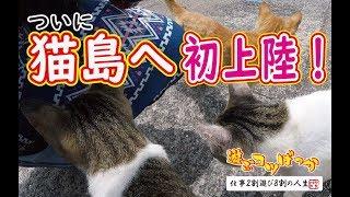 【猫】ついに猫島へ初上陸!