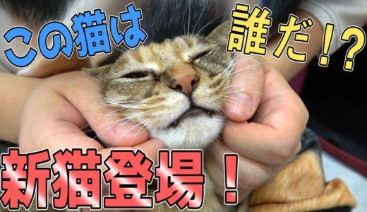 我が家に新たな猫がやってくる?!たくさんの保護猫を発見してしまいました…!