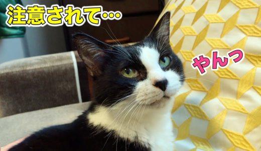 台所に登ったのを見られて小声で言い訳する猫【じゃんけんタイムあり】