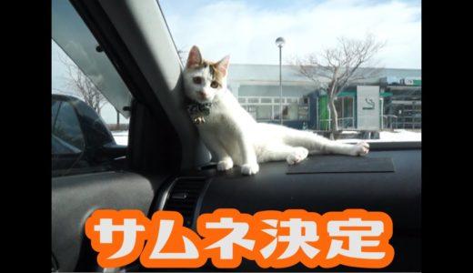 【保護猫】農道ねこ成長記録05 a stray cat growth record No5