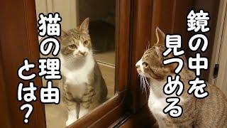 猫が悲しい顔をして元気が無い時の猫特有の理由とは?!