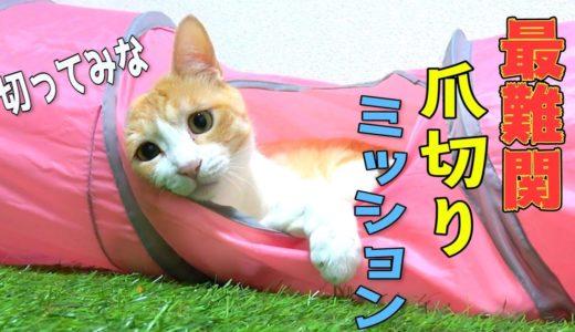 【暴れん坊猫】ロビンの爪を切ろうとしたら悲劇が…