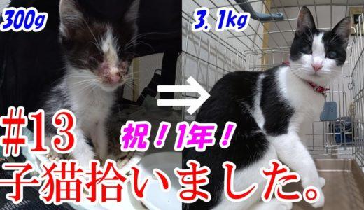 【猫】子猫拾いました#13:1年経ったよー! I picked up a kitten 1 year ago.