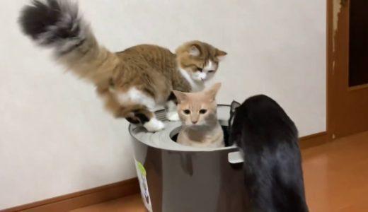 トイレの正しい使い方を教えてくれる猫がかわいい