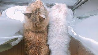 【リアル】起きてから愛猫とバイバイするまでこんな感じ。