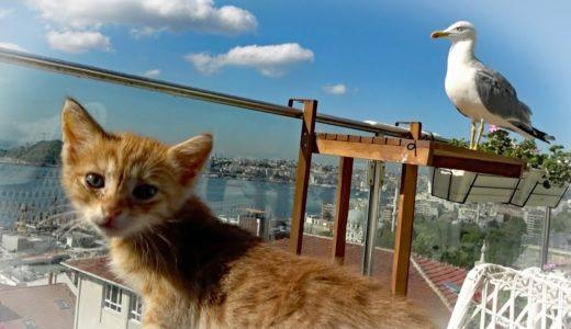 子猫と歌舞伎!ベランダに出たい猫(保護を託されて ♯3)