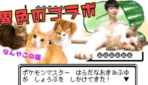 ライバロリさんと異例のコラボ!最強の猫じゃらしにふゆくんがメロメロに!!