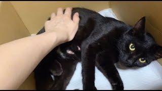 黒猫保護して1日目!驚くほどたまちゃんに懐く·····