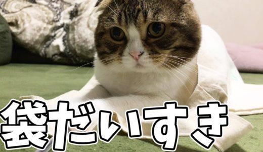袋の魔力に魅せられた猫